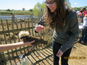 Cassie approaches a chicken to pet it, slightly startled by its strange appearance. photo by Mackenzie O'Guin